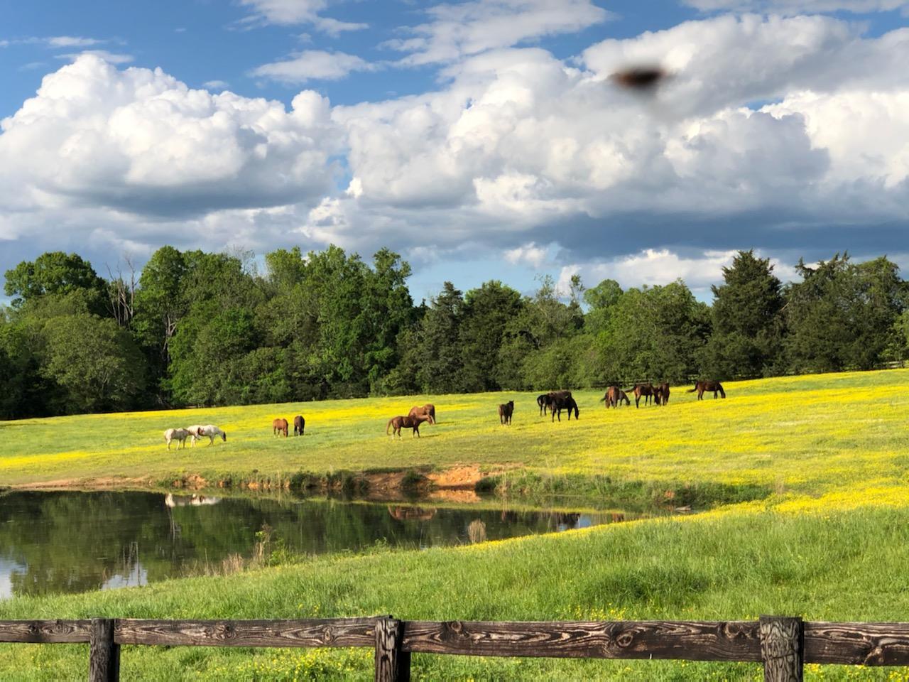 Chapel Hill, North Carolina (United States)
